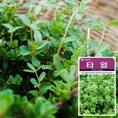 (허브) 타임 씨앗 (200립)  허브씨앗 채소씨앗 새싹