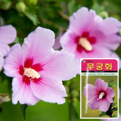 무궁화 씨앗 (100립)  나팔꽃씨앗 백일홍꽃씨앗