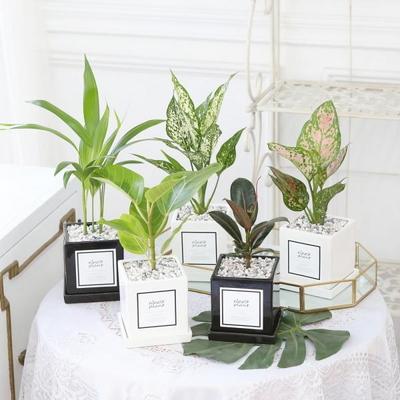 아모르 화분 공기정화식물 모음전 15종