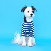 플로트 스탠다드 골지티셔츠 블루 강아지용품