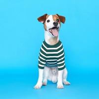 플로트 스탠다드 골지티셔츠 그린 강아지용품