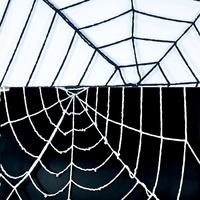 거미줄 1.5m(블랙/화이트)