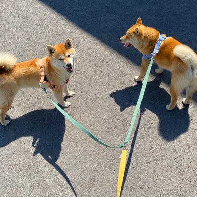 두마리 산책용 트윈 리드줄