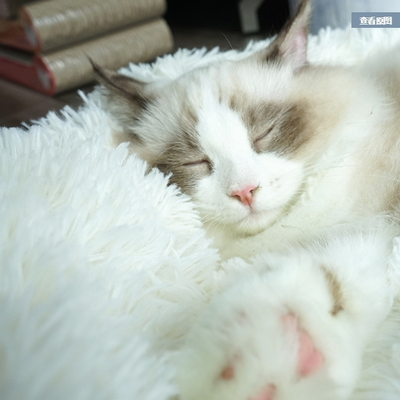 고양이 몬스터 방석 하우스 강아지 집 마약방석