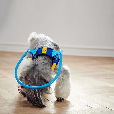 강아지 노견 실명 보조 시력장애 엔젤 충돌 방지 링