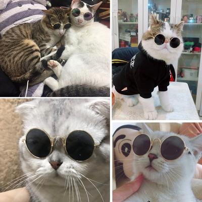 강아지 안경 고양이 선글라스 펫글라스 도글라스 냥글라스 악세사리 소형견전용