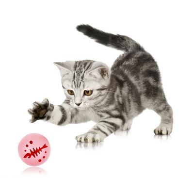 파스텔독 고양이 오감만족 공놀이 3종 세트