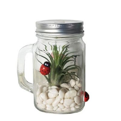 유리컵 틸란드시아(1개세트)
