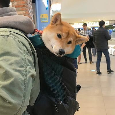 강아지 백팩 어부바 찰떡가방 Pet bag