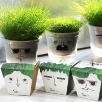 그리니 4종 / 잔디화분 식물키우기