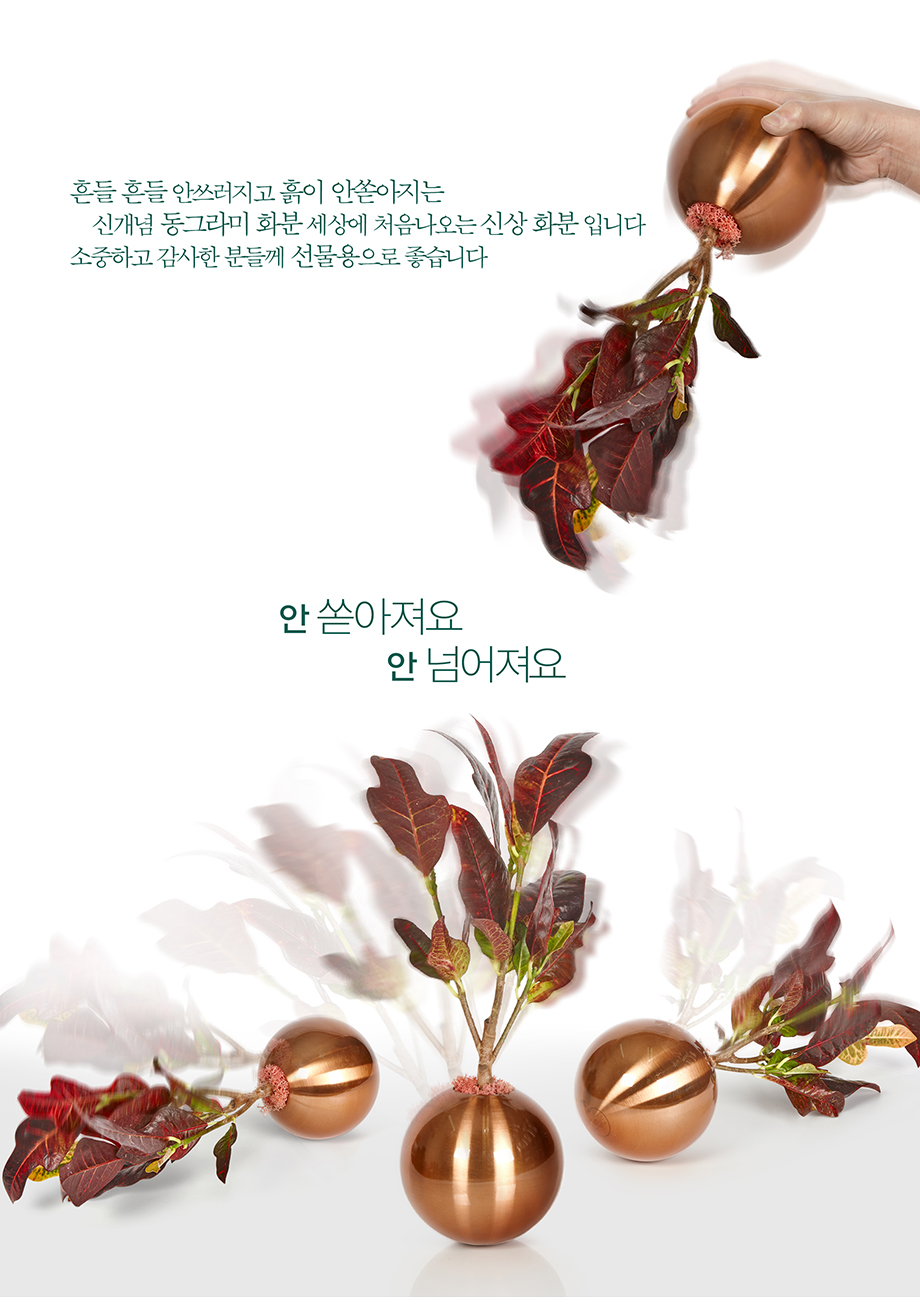 칼라홍콩야자 공기정화 동그라미화분 110mm 받침 - 동그라미화분, 65,000원, 허브/다육/선인장, 공기정화식물