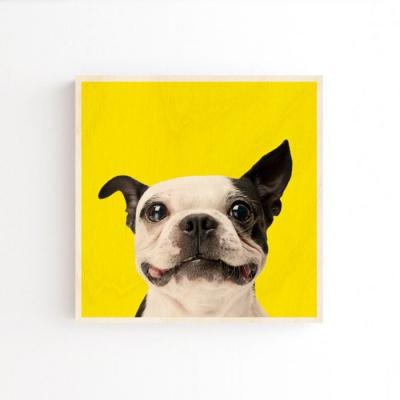 강아지액자 배경O 20x20cm 벽걸이 10종 반려견액자