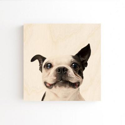 강아지액자 배경X 20x20cm 벽걸이 10종 반려견액자