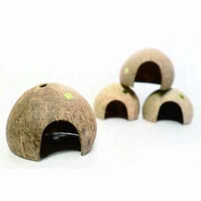 코코넛 은신처