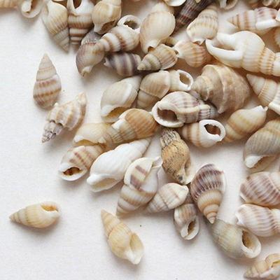 자연조개껍질_줄무늬소라100g