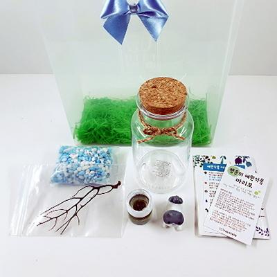 선물세트-플코 마리모 DIY 세트