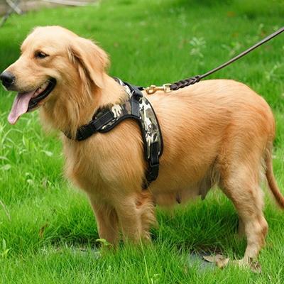 대형견 하네스 중형견 강아지 사계절 가슴줄